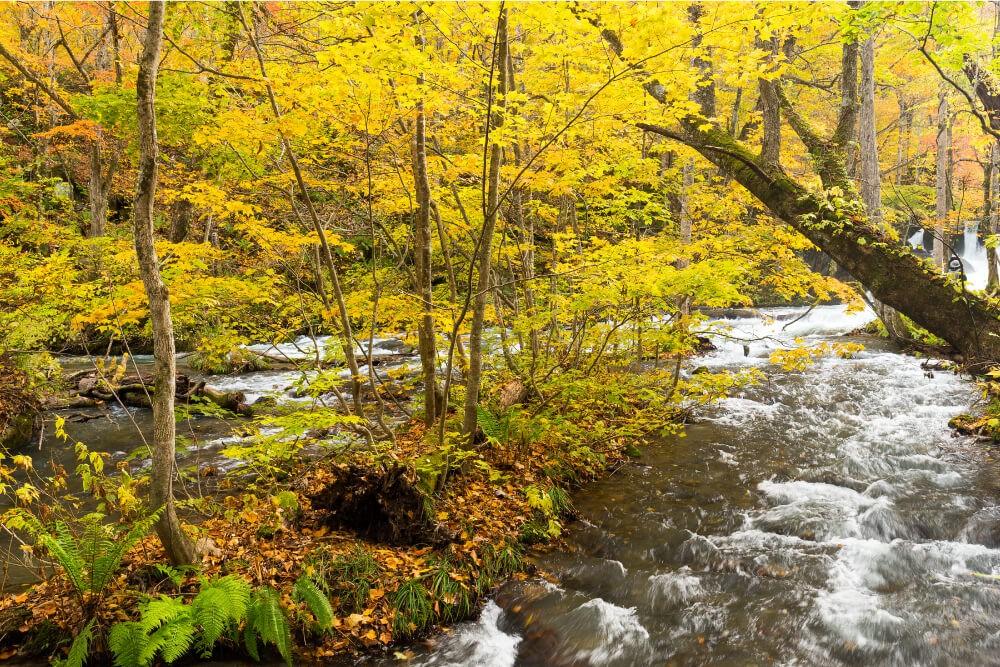 Stream water image